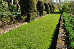 hedge maintenance london