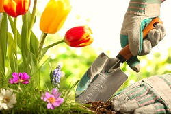 Bon Let Our Garden Maintenance Team Take Care Of Your Garden So You Donu0027t Have  To!